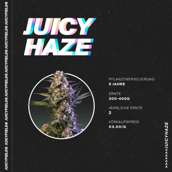 juicyfields haze